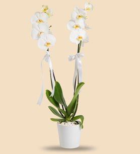 çiçek Sepeti ürünleri Indirimli Aynı Gün Teslim