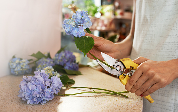 saksı çiçeği budama